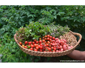 Roots and Leisure_fresh produce