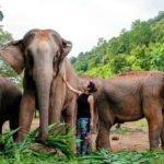 RootsandLeisure_ElephantPark_Thailand