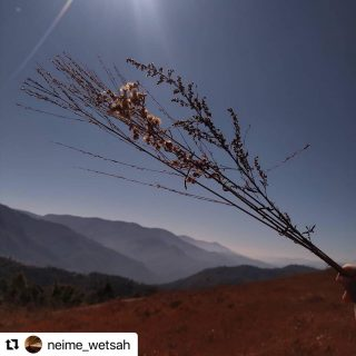 #Giveaway with @craate.in and @rootsandleisure   Entry # 21 by @neime_wetsah   #Repost @neime_wetsah with @make_repost ・・・ I think 2020 has taught each one of us many things. And honestly, it has taught me how to live in the moment.  As I captured, what I believed 'to live in the moment' picture, I thought of the things that I'm grateful for. To cherish the little things in life. To be more in awe of nature. To be content. To be happy and grateful for all.  2020 was an uncertain year, but nevertheless, I believe it has taught us many things.  •to live in the moment•  @rootsandleisure @craate.in